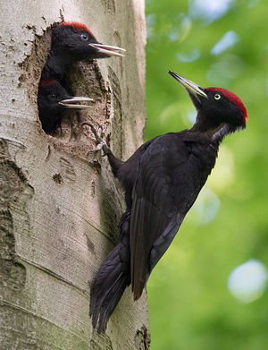 Pic noir-photo diniosoria.com