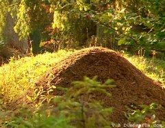 Fourmillière - V.B Dinosoria.com