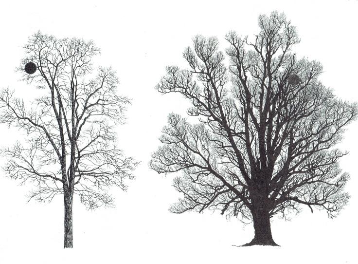 le gui-arbres questions2.jpg