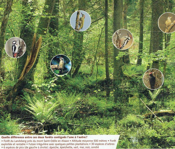 forêt diversifiée et 6 pics