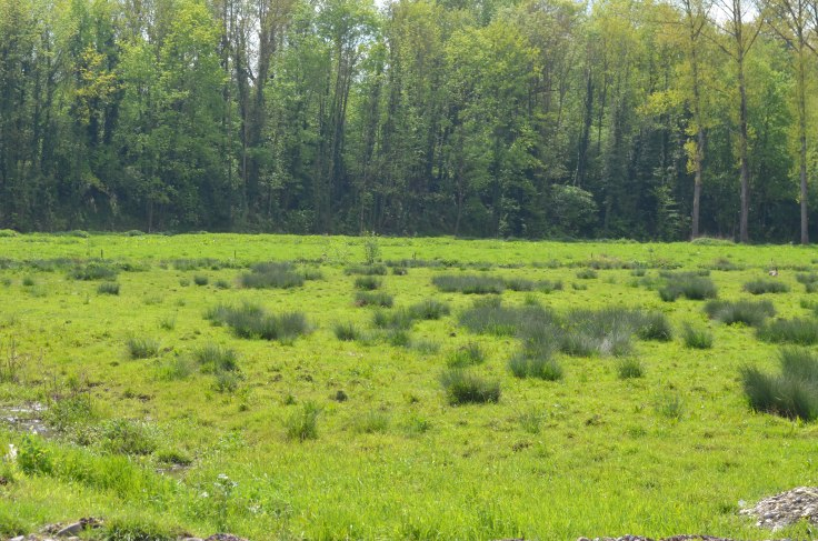 Prairies-avec-joncs-zone-humide