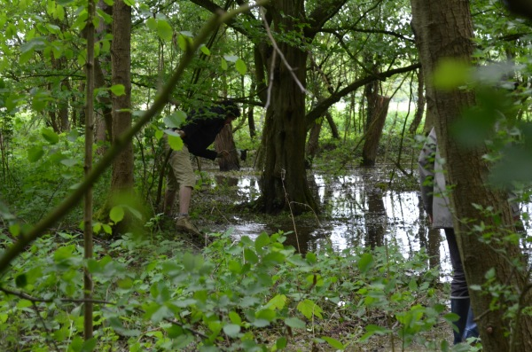 les-marais-de-la-réserve-domaniale-de-Hosdent.jpg