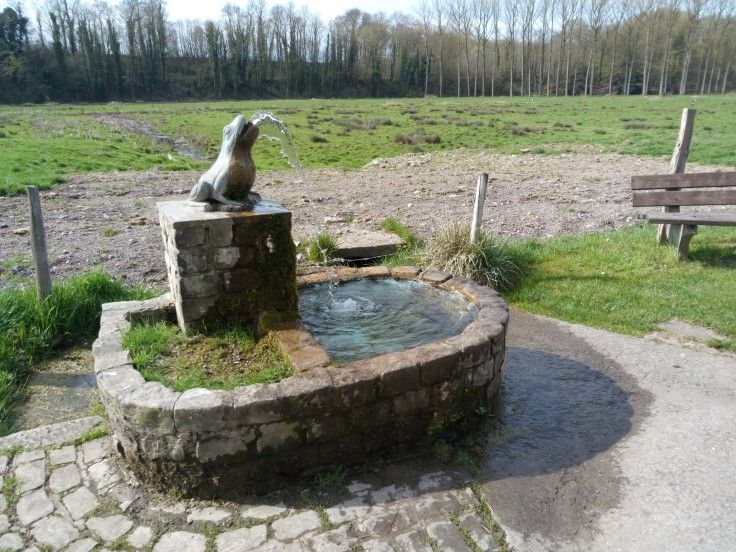 La-fontaine-de-la-Rainette-des-Marais