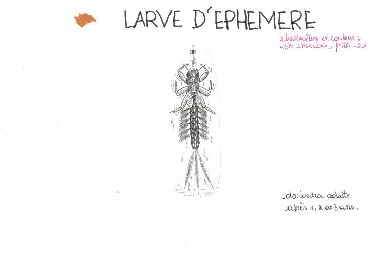 larve éphémère