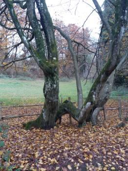 Arbre-aux-branches-bizarres.jpg