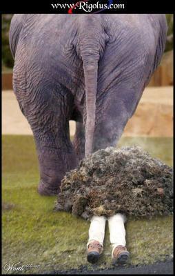 crotte d'éléphant