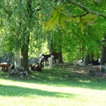 Prairie de luxe pour les vaches