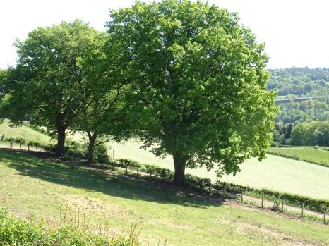 """les 3 arbres avant """"le lacet"""""""