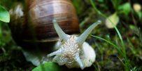 960px-Snail-front-e1562084597979-820x412