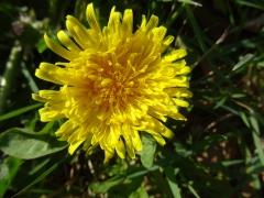 l'inflorescence