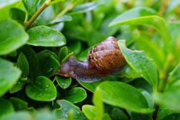 escargot-bio-elevage-maison-royer